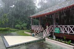 Mt. Kinabalu NP, Borneo, Malaysia