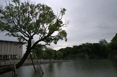 Tree and Nagoya castle