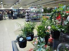 P5061476 (flemming.ladefoged) Tags: flowers grønt grøntsager frugt