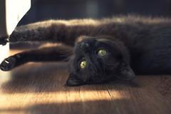 Amy (Monica Fiuza) Tags: gato gata mascota cat pet