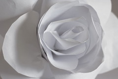White Paper Rose (ertolima) Tags: justwhitepaper rose macromondays petals flower macro hmm brilliant wow