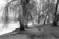 breathe it all in (bluechameleon) Tags: sharonwish benches blackandwhite bluechameleonphotography branches bw fallenleaves fog foliage ice landscape lostlagoon mysterious nature path stanleypark trees water weepingwillow willowtrees winter