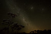 clear (richardnz308) Tags: sky stars clear night cloudless silhouette d7100 nikon wide angle milkyway pohutukawa calm nightphotography summer camping outdoors celestial heaven heavens peace tranquil tranquility starlight newzealand holiday