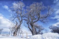 Ca Fait Tellement Longtemps (Sous l'Oeil de Sylvie) Tags: arbres trees vieux old arche temps time ciel sky blue bleu sousloeildesylvie pentax ks2 sigma1020mm route132 couleurs colors hiver winter neige snow janvier2017