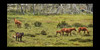 Long Plain Brumby's #4 (Struan Timms Photography) Tags: nikon d750 sigma80400 wildhorses nsw australia kosciuszko longplain foal landscape highplains struantimmsphotography