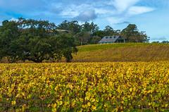 Kastania Vineyard (Petaluma 1/7) (ben_leash) Tags: blue winecountry california northerncalifornia petaluma sonomacounty sonoma bayarea wine vineyard winery kastania nikon d750 85mmf18 vine vines