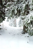 Tracks In The Snow (Mazelo) Tags: dogwood2017 nikon d600 sigma 70200mm f28 winter snow forest track tracks animal nature woods frozen cold dof depthoffield bokeh suomi finland jyväskylä jyvaskyla tree green outdoors outside wideopen ice view blur
