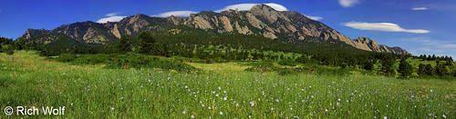 Photo - Bear Peak With Blue Flax flowers - City of Boulder Open Space and Mountain Parks