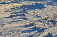 Winter ❄ (ChemiQ81) Tags: polska poland polen polish polsko chemiq польша poljska polonia lengyelországban польща polanya polija lenkija ポーランド pólland pholainn פולין πολωνία pologne puola poola pollando 波兰 полша польшча بولندا landscape krajobraz jurajskim szlakiem jura jurassic trails jurajski pustynia błędowska desert chechło dąbrowa górnicza błędów outdoor zima winter 2017 snow śnieg