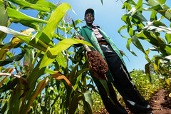 Climate-smart soils: testing soil health in Western Kenya
