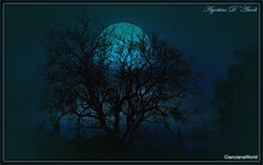 Night blue - Febbraio-2017 (agostinodascoli) Tags: nightblue noteblu luna notte alberi mandorlo nikon nikkor cianciana sicilia photoshop photopainting digitalpainting art digital nature texture agostino dascoli creative blu colore fullcolor