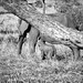 The Elephants of Tarangire National Park