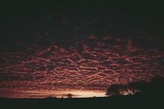 Nuages en croute sur lit de soleil (Jonathan Nardi) Tags: originalphotographers photographersontumblr beautiful bokeh campagne color colorama coloration compain coucherdesoleil couleur croute crépuscule france lastchapter light lumiere magnifique mars nuage nuageencroute perche red rouge rural soir soleil spice sun sunburst