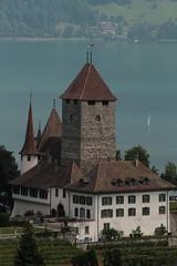 Schloss Spiez ( Château - Castle ) am Ufer des Thunersee in Spiez im Berner Oberland im Kanton Bern der Schweiz (chrchr_75) Tags: christoph hurni schweiz suisse switzerland svizzera suissa swiss chrchr chrchr75 chrigu chriguhurni juni 2015 albumzzz201506juni juni2015 albumregionthunhochformat hochformat regionthun kantonbern berner oberland albumschlossspiez schlossspiez spiez berneroberland schloss château castle castello kasteel 城 замок castillo mittelalter geschichte history gebäude building archidektur albumschweizerschlösserburgenundruinen albumschlösserkantonbern bern berne berna bärn schlossbern schlosskantonbern chriguhurnibluemailch sveitsi sviss スイス zwitserland sveits szwajcaria suíça suiza thunhochformat albumzweifüreinsthunundoberland2016 albumveröffentlichtefotos susisa kanton