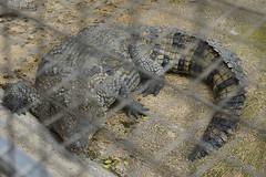 Excursión Crocodile Park Torremolinos