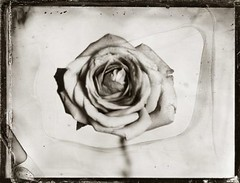 Collodio Wet Plate Ambrotype 2012 by Daniel Samanns (Daniel Samanns) Tags: berlin love wet germany nude book akt foto fotografie photographer photographie suspension daniel plate bondage exhibition seminar workshop tintype ambrotype wetplate ferrotype process tutorial intensive collodion aktfotografie photophotography kollodium nassplatte samanns