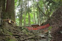 Kibune (MackaColorinche) Tags: red tree green japan temple moss kyoto shrine roots 日本 kibune 京都市 貴船