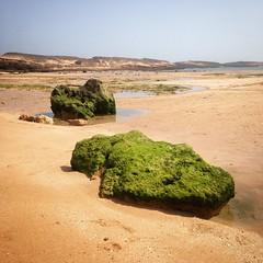 (Rosino) Tags: morocco oualidia