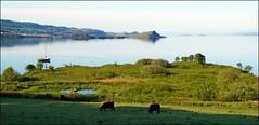 good morning scotland (tor-falke) Tags: landscape scotland wasser flickr view sony scottish land loch dslr paysage landschaft schottland lochmelfort niceview écosse schottisch schöneaussicht scotlandtour schottlandtour sonyalpha lochmelforthotel scotlandtours alpha58 torfalke flickrtorfalke schottlandreise2015