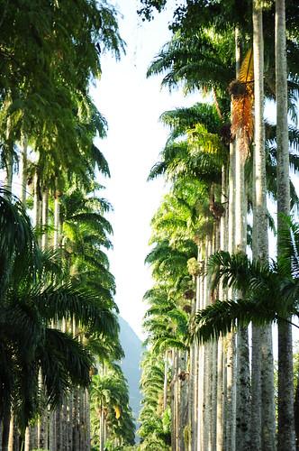 Jardim Botânico do Rio. Amo esse lugar!