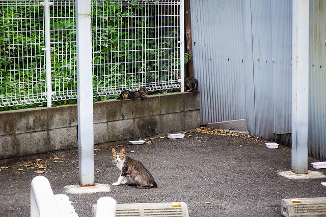Today's Cat@2015-08-08