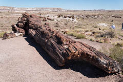 Giant Logs Trail (sgplewka) Tags: 2016 usa petrifiedforestnp holbrook arizona us