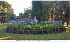 parque Eva hajduk agapantthus 31 de diciembre 2016 - Diaz DE Vivar Gustavo (Diaz De Vivar Gustavo) Tags: naturaleza nature diaz de vivar gustavo parque eva hajduk ranelagh flowers buenos aires estacion