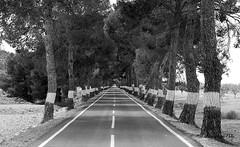 Surcando el espacio (Fotgrafo-robby25) Tags: byn caminosycarreteras fujifilmxt1 árbolesyarbustos