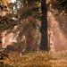 Far Cry Primal / Morning Glory (Alt)