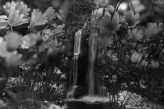 The Secret Garden (F.emme) Tags: 7daysofshooting week27 abooktitle blackandwhitewednesday 7dos garden arboretum composite blackandwhite bnw