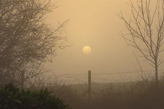 Welcome Sun