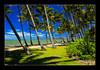Palmcove (elc13600) Tags: australie australia palmcove queensland tropiques beach plage plamtree palmier ocean mer sea awesometrees