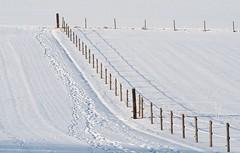 Winter walk [Explored Jan 23, 2017] (G_E_R_D) Tags: winter snow schnee zaun fence shadow schatten walk spaziergang