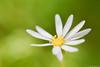 おはな✿ / flower (March Hare1145) Tags: 花 flower plant 植物 マクロ macro 日本 japan