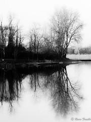 Riflessi (Rocco Fanello) Tags: paesaggio inverno acqua cusago landscape riflesso cielo albero