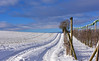 Balade dans la neige (Diegojack) Tags: echandens vaud suisse hiver froid neige campagne paysages