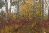Cerknica Lake (happy.apple) Tags: dolenjejezero cerknica slovenia si cerkniškojezero cerknicalake autumn jesen trees pine slovenija