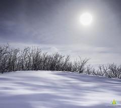 Le soleil dans la lune/Snoozing sun/Sömnig sol [Explore] (Elf-8) Tags: winter snow tree forest shadow blue contrast blur ice
