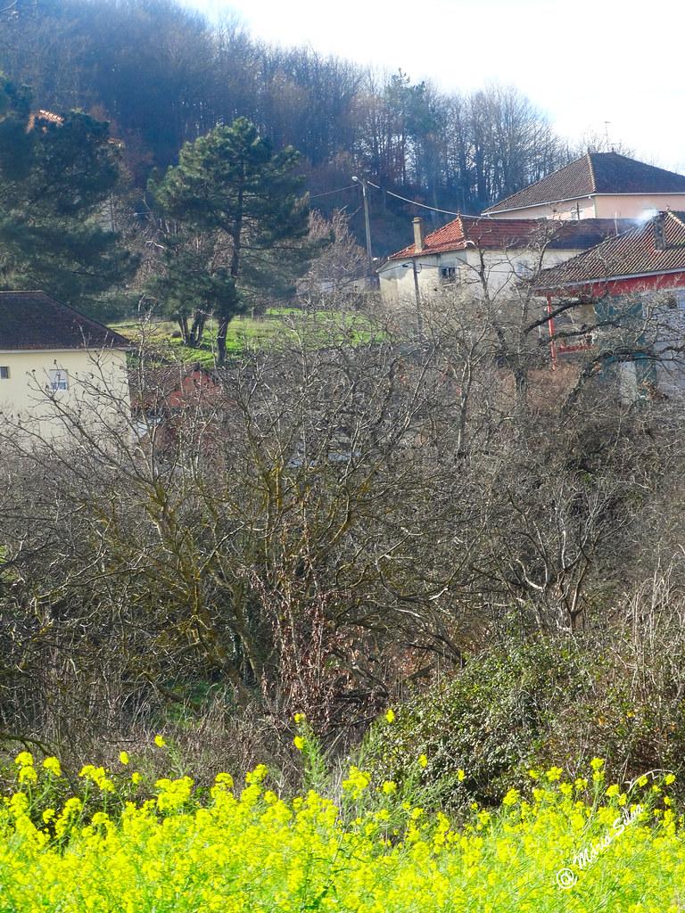 Águas frias (Chaves) - ... flores de inverno ...