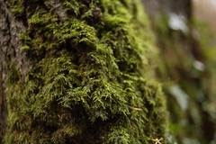 Mossy (GarethBell) Tags: moss wood forest tree woods beaumaris north northwales wales anglesey damp green bark 6d canon canon6d