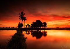 Magical Sunset.. (syukz_sam) Tags: sunset nikon paddy tokina filter lee filters magical 1224mm hitech lanscape haida d300 rgnd