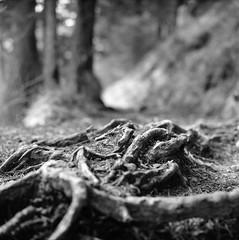 Am Wasser 5 (marcel:gladbach) Tags: bw white lake black art 120 film water rolleiflex see fine f pan 28 weiss ilford schwarz heiterwang