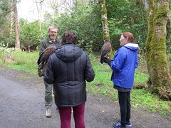 Falconary Ireland016