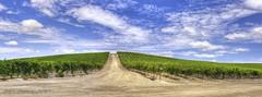 Vasco Road (toddarbini) Tags: california vineyard wine ebrp ebrpd vascoroad eastbayregionalpark ebparksok toddarbini