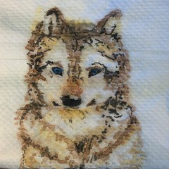 Little cute, by Marina (Dona Minúcia) Tags: life dog pet cute art cão animal watercolor paper table husky wolf arte little napkin study vida cachorro fofo paiting filhote pintura aquarela gracinha belobeauty