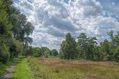 Mit dem Rad ums Moor (Karsten Hhne) Tags: flora sommer moor landschaft wege naturschutzgebiet lbbecke blumenundpflanzen
