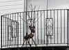 Rudolf's Window (Shastajak) Tags: reindeer rudolftherednosedreindeer balcony window railings seasonal