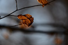 Nothing burns like the cold (Pics4life.nl) Tags: winter light dof colors feeling leave d750 nikon wow cold