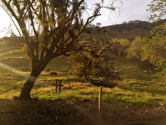 Naturaleza viva (andresvelezu) Tags: naturephotography naturaleza nature trees tree grass green freshair aire airelibre mountain sunset sunrays rayosdesol montaa arboles atardecer horses life vida colombia antioquia