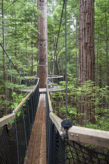IMG_8958 copy (AsianInsights) Tags: newzealand northisland asiapacific holiday nature 2016 december fern ferntree forest rotorua forestresearchinstitute research redwoods redwood treewalk redwoodforest